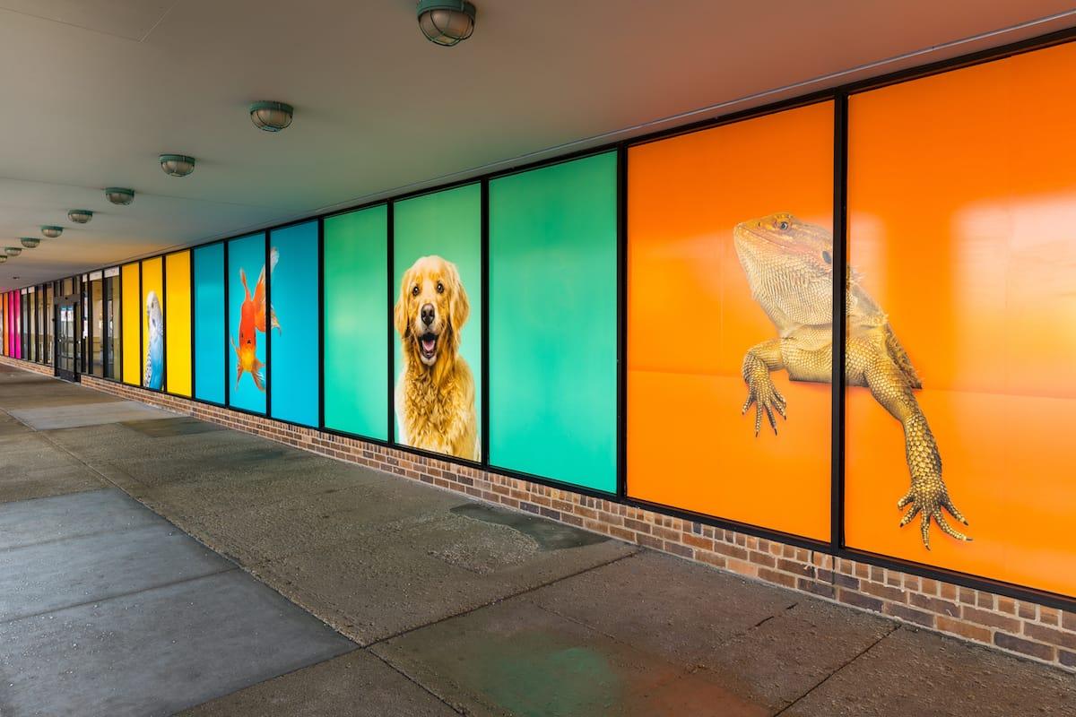pet smart-window graphics-7846-HDR